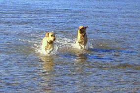 Hoseasons Dog Friendly Holiday Parks Dorset - Pet Holiday Finder